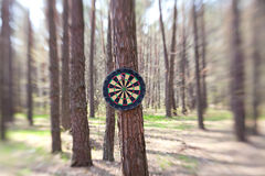 Darts boards on the tree in forest Stock Photo