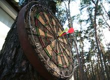 Darts game. Darts on the tree Stock Photo