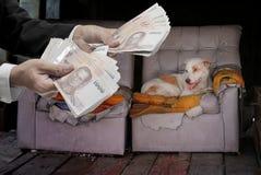 Daruje pieniądze dla przybłąkanego psa, Zwierzęca dobroczynność Zdjęcie Stock
