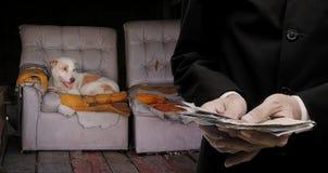Daruje pieniądze dla przybłąkanego psa, Zwierzęca dobroczynność Zdjęcie Royalty Free