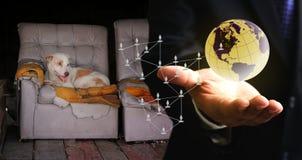 Daruje pieniądze od sieci dla przybłąkanego psa, dobroczynność Zdjęcia Stock