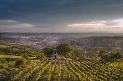 Daruvar vinyard. Daruvar vineyard in june 2014 at sunset stock photo