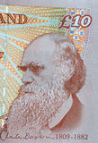 Darwin on British Currency Royalty Free Stock Images