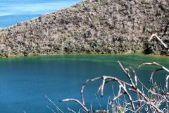Darwin Lake Isabela Island (Galápagos, Equador) Fotos de Stock Royalty Free