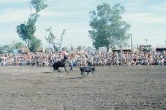 1976 Darwin, N T australië rodeo Royalty-vrije Stock Foto
