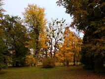 ` Das árvores do outono do ` Imagem de Stock