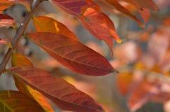 Das Ändern der Blätter während des Herbstes Stockfotos