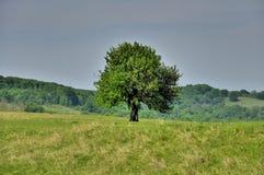 Das Überleben - ein Baum schlug durch Blitzschlag Stockbild