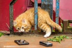 Das überraschte Kätzchen sieht seine eigene Reflexion im Handy Stockbild
