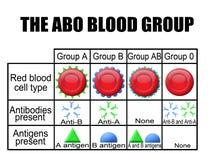 Das ABO-Blutgruppediagramm Stockfotos