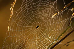 Das abstrakte Web Lizenzfreies Stockbild