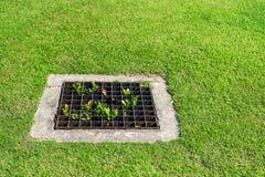 Das Abwasserkanalgitter auf dem Rasen Stockfotos
