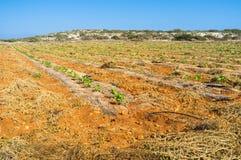 Das Ackerland Stockbild