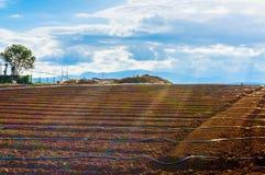 Das Ackerland mit Linien Wasser Lizenzfreie Stockfotos