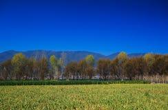 Das Ackerland unter dem schneebedeckten Berg, Lizenzfreie Stockfotos