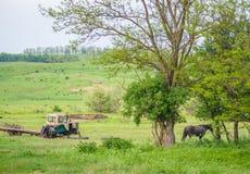 Das alte Agrimotor und ein Pferd Stockbild