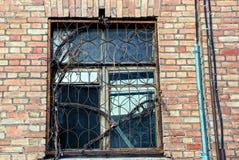 Das alte Fenster mit einem Gitter überwältigt mit trockenen Niederlassungen auf einer Backsteinmauer Lizenzfreie Stockfotos