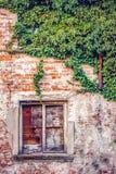 Das alte hölzerne Fenster mit Efeu auf der Wand Stockfotografie