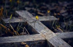 Das alte hölzerne Grabkreuz und der junge Sprössling stockfotos