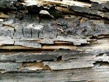 Das alte Holz Stockfoto