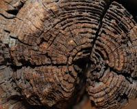 Das Alter des Baums lizenzfreies stockbild