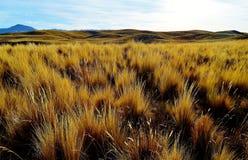 Das Altiplano Lizenzfreie Stockbilder