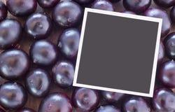 Das Amazonas-acai Frucht Euterpe oleracea Stockfotos