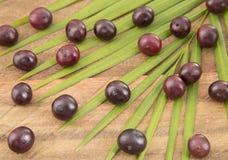 Das Amazonas-acai Frucht Euterpe oleracea Stockbild