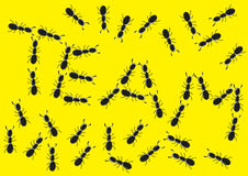 Das Ameisenteam stock abbildung