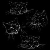 Das Angreifen, ruhig und Schlafenkatze, die schwarze Zeichnung auf einem wh Stockbild