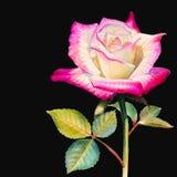 Das Aquarell, das bunte Blume der ursprünglichen realistischen glücklichen Postkarte von malt, stieg stockbild