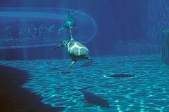 Das Aquarium von Genua, Italien Stockfoto