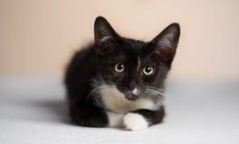 Das Aufpassen der gelb-äugigen, schwarzen Katze. Lizenzfreie Stockfotos
