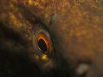 Das Auge Stockfoto