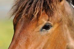 Das Auge des Pferds Lizenzfreie Stockbilder