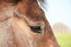Das Auge des Pferds Stockfotografie