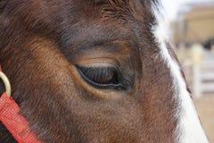 Das Auge des Pferds Stockbilder