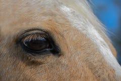 Das Auge des Pferds Stockbild