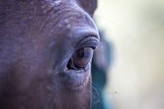 Das Auge des Pferds lizenzfreies stockfoto