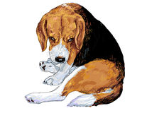 Das Auge des Spürhunds Lizenzfreies Stockbild