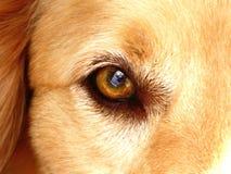 Das Auge von bemannt besten Freund Stockbild
