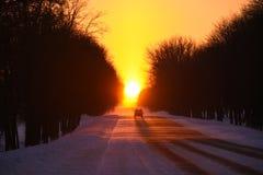 Das Auto geht bei Sonnenuntergang auf einer schneebedeckten Straße des Winters in einem Schneesturm Lizenzfreies Stockbild
