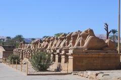Das avanue PF die RAMs der Karnak-Tempel Stockfotografie