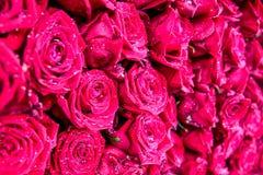 Das Bündel von Rosen mit Wassertropfen Stockfotos