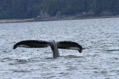Das baleias passagem do interior dentro, Alaska Foto de Stock