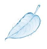 Das Baumblatt, das vom Wasser hergestellt wird, spritzt lokalisiert auf weißem Hintergrund Lizenzfreie Stockbilder