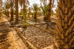 Das Bewässerungssystem in der Oase Stockbilder