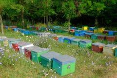 Das Bienenhaus Lizenzfreie Stockfotos