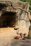 Das Bild der Affefamilie Stockbild
