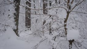 Das Bild der tretenden Frau ihre Weise durch Schneewehen mit Skipfosten im Waldweiblichen Athleten auswählend tut Nordic stock footage